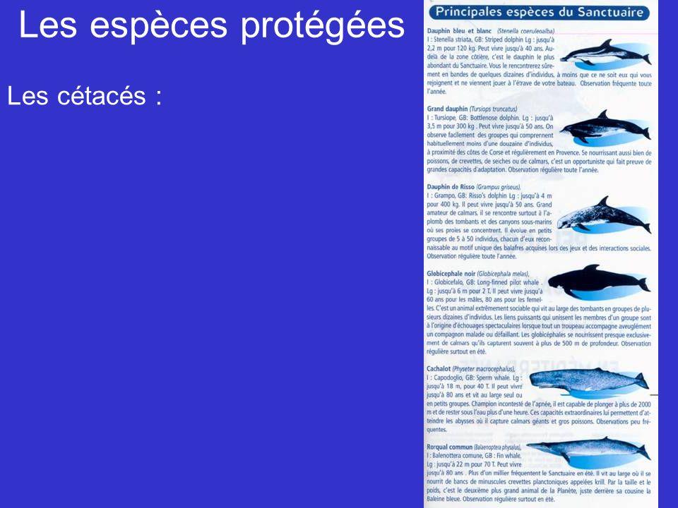 Les espèces protégées Les cétacés :