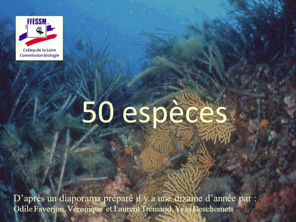 1 CoDep de la Loire Commission biologie 50 espèces Daprès un diaporama préparé il y a une dizaine dannée par : Odile Faverjon, Véronique et Laurent Tr