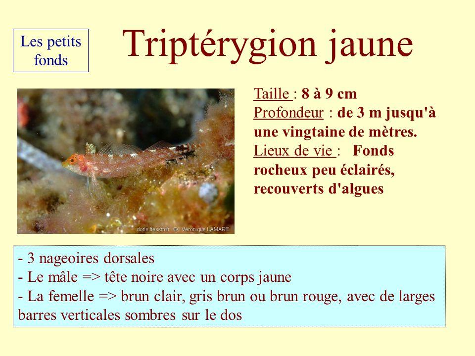 Taille : 8 à 9 cm Profondeur : de 3 m jusqu'à une vingtaine de mètres. Lieux de vie : Fonds rocheux peu éclairés, recouverts d'algues - 3 nageoires do