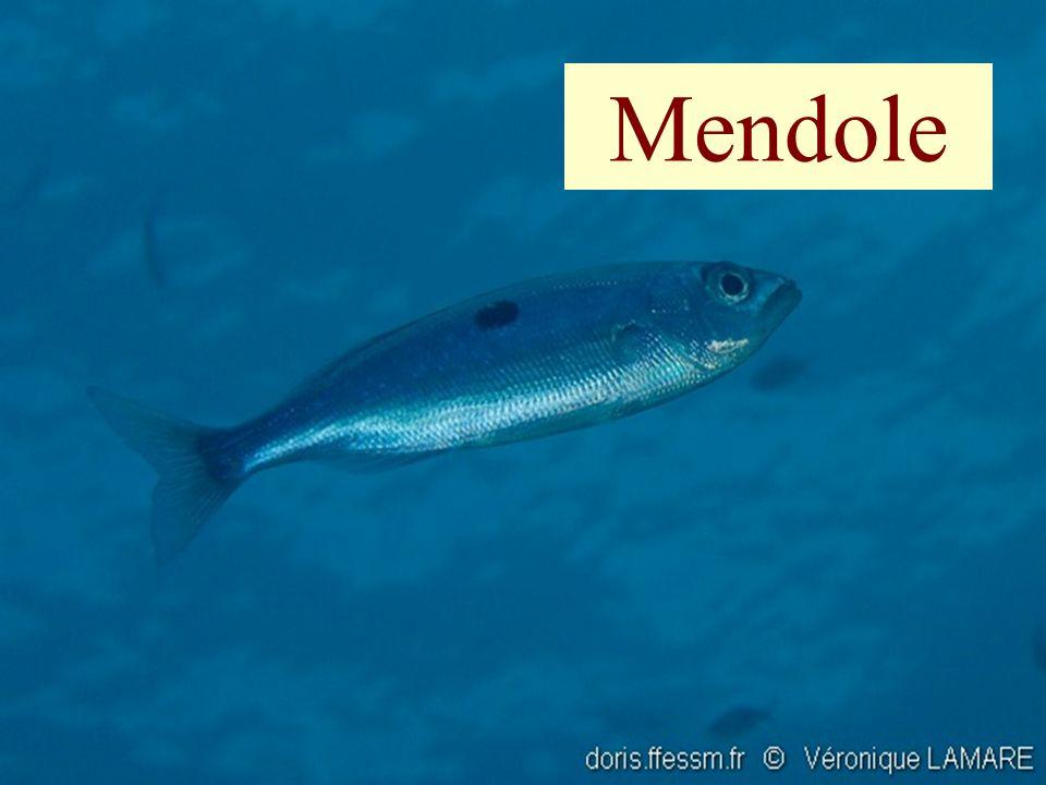 109 Mendole