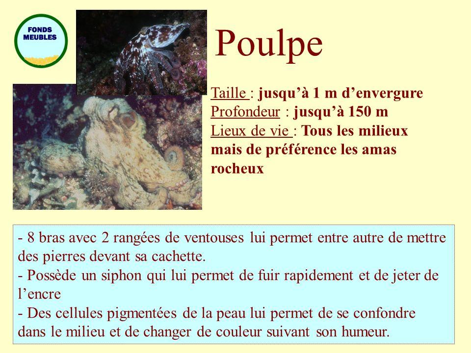 Poulpe Taille : jusquà 1 m denvergure Profondeur : jusquà 150 m Lieux de vie : Tous les milieux mais de préférence les amas rocheux - 8 bras avec 2 ra