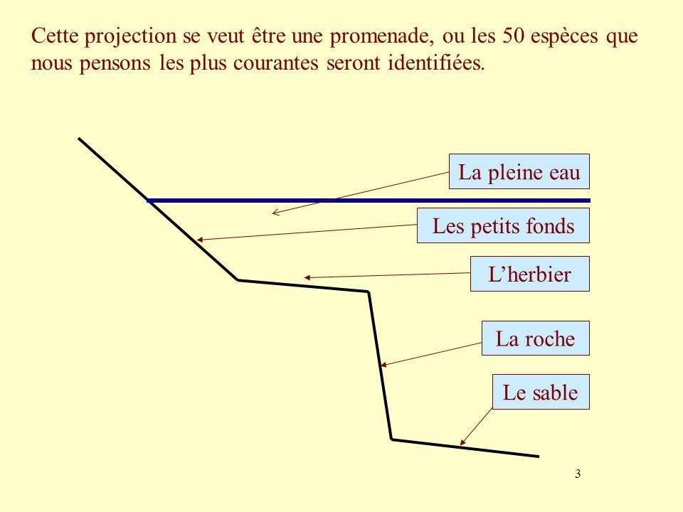 3 Cette projection se veut être une promenade, ou les 50 espèces que nous pensons les plus courantes seront identifiées. La roche Lherbier Les petits