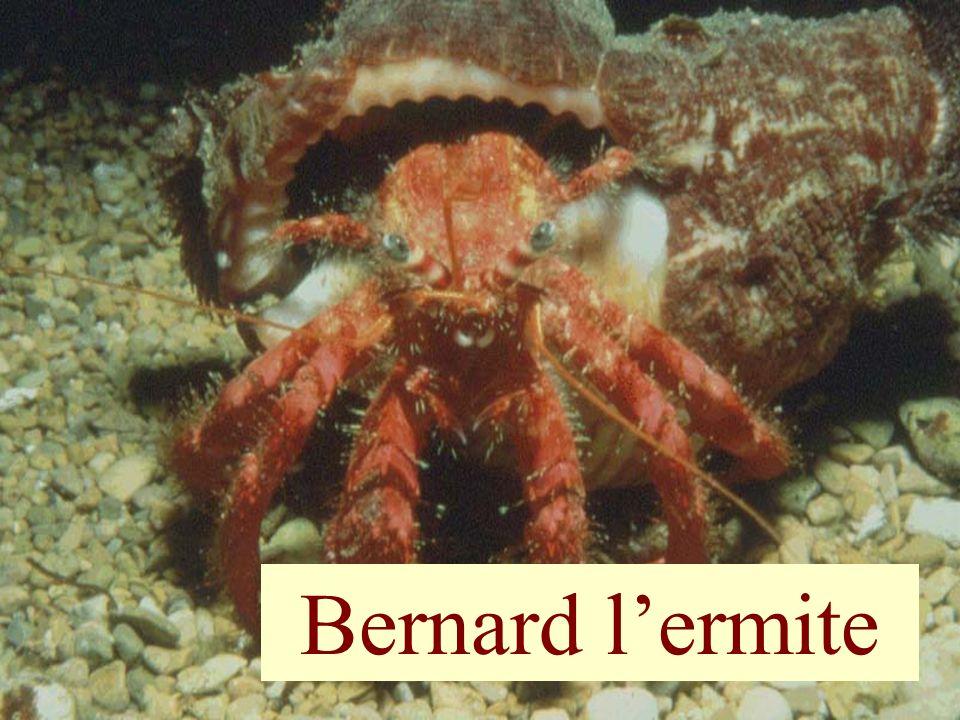 64 Bernard lermite