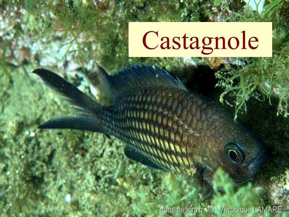 86 Castagnole