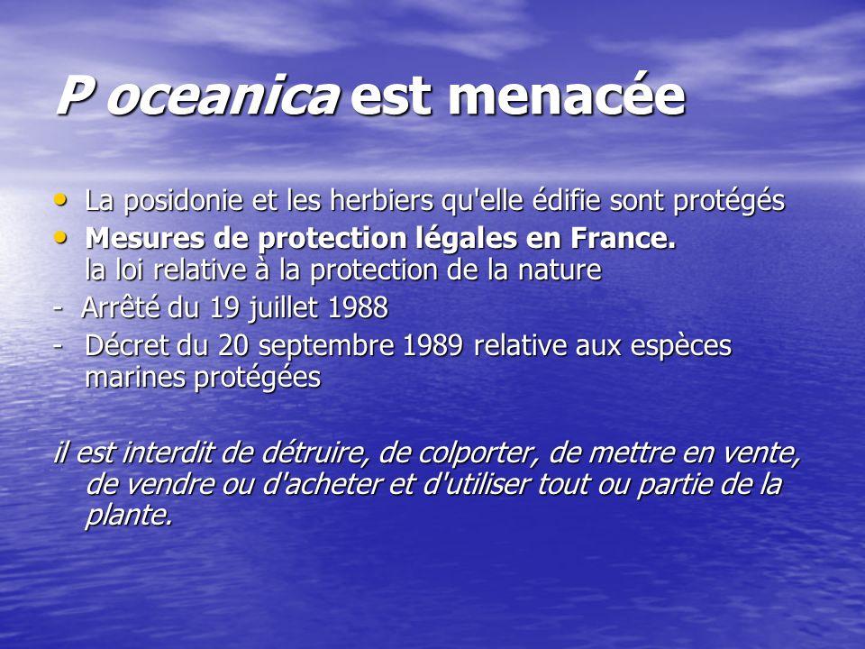 P oceanica est menacée La posidonie et les herbiers qu'elle édifie sont protégés La posidonie et les herbiers qu'elle édifie sont protégés Mesures de