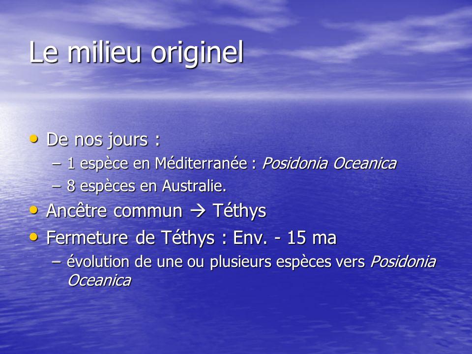 Le milieu originel De nos jours : De nos jours : –1 espèce en Méditerranée : Posidonia Oceanica –8 espèces en Australie. Ancêtre commun Téthys Ancêtre