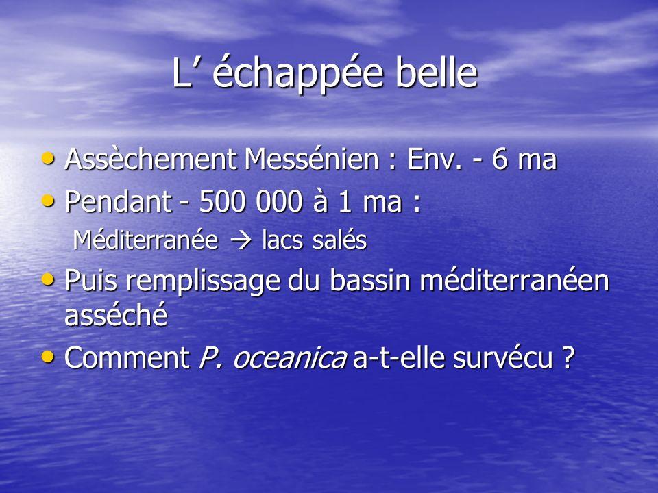 L échappée belle Assèchement Messénien : Env. - 6 ma Assèchement Messénien : Env. - 6 ma Pendant - 500 000 à 1 ma : Pendant - 500 000 à 1 ma : Méditer