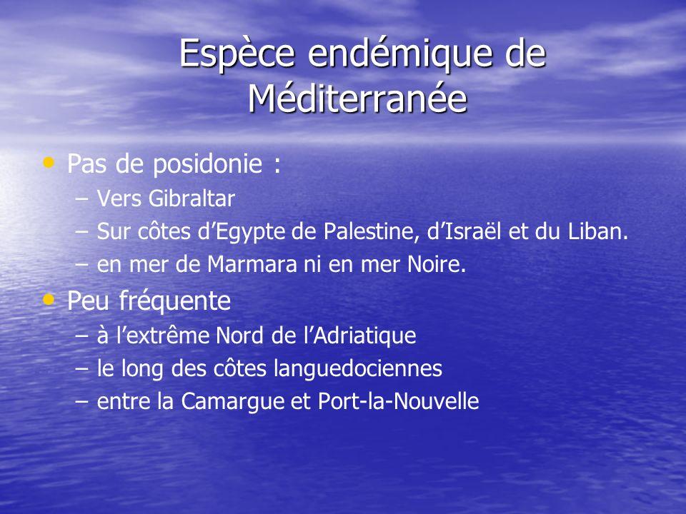 P oceanica est menacée La posidonie et les herbiers qu elle édifie sont protégés La posidonie et les herbiers qu elle édifie sont protégés Mesures de protection légales en France.