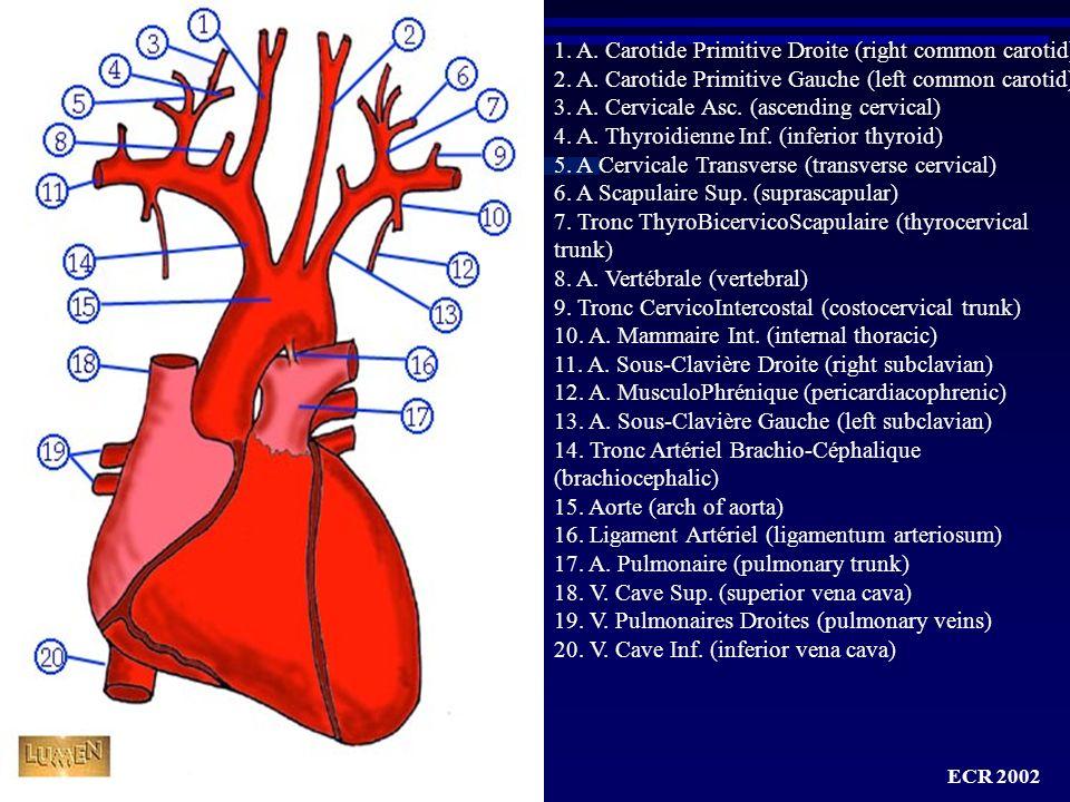 ECR 2002 Rappels anatomiques : les artères