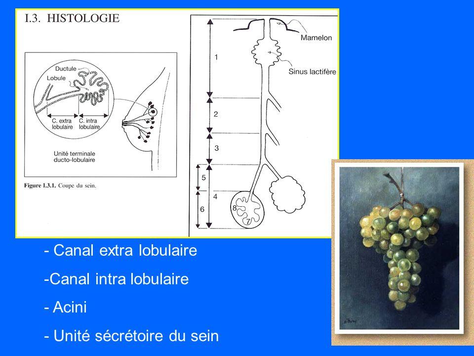 - Canal extra lobulaire -Canal intra lobulaire - Acini - Unité sécrétoire du sein