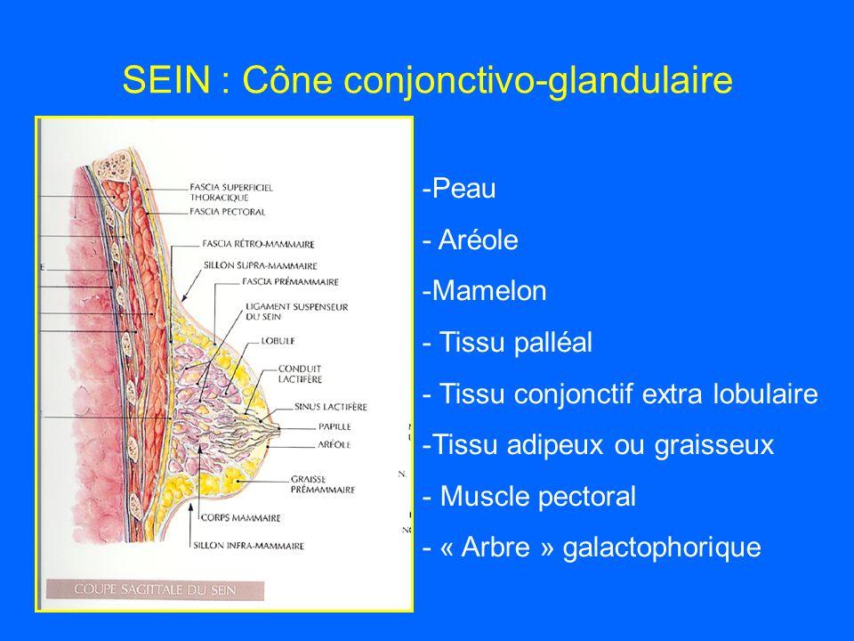 SEIN : Cône conjonctivo-glandulaire -Peau - Aréole -Mamelon - Tissu palléal - Tissu conjonctif extra lobulaire -Tissu adipeux ou graisseux - Muscle pectoral - « Arbre » galactophorique