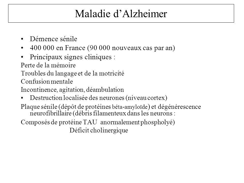 Maladie dAlzheimer Démence sénile 400 000 en France (90 000 nouveaux cas par an) Principaux signes cliniques : Perte de la mémoire Troubles du langage