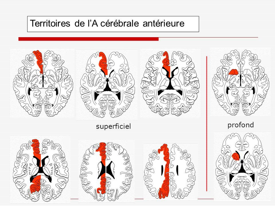 Territoires de lA cérébrale antérieure superficiel profond