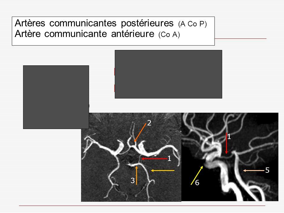 Artères communicantes postérieures (A Co P) Artère communicante antérieure (Co A) A Co P (1) Siphon carotidien (6) ACP: P1 (3) ACP: P2 A Co A (2) A ba