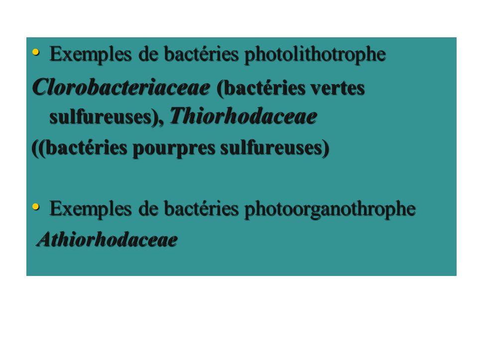 Exemples de bactéries photolithotrophe Exemples de bactéries photolithotrophe Clorobacteriaceae (bactéries vertes sulfureuses), Thiorhodaceae ((bactér