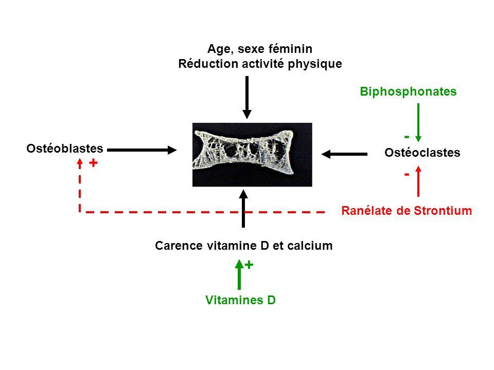 Ostéoblastes Ostéoclastes Carence vitamine D et calcium Age, sexe féminin Réduction activité physique Vitamines D Biphosphonates + - Ranélate de Stron
