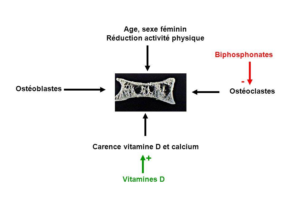 Ostéoblastes Ostéoclastes Carence vitamine D et calcium Age, sexe féminin Réduction activité physique Vitamines D Biphosphonates + -