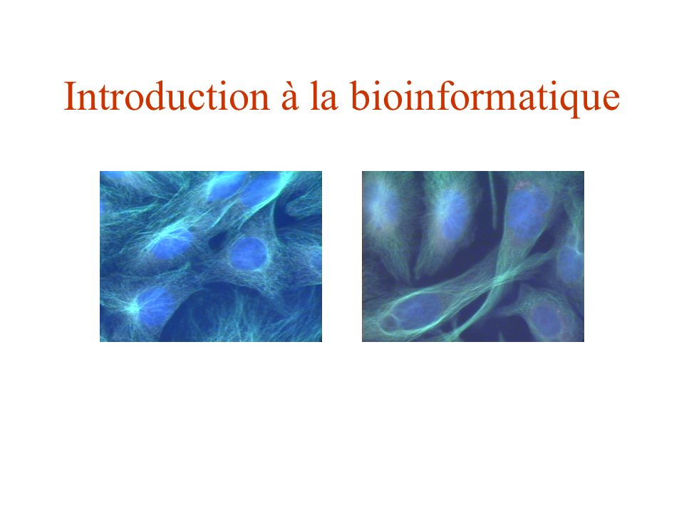 Biologie in situEnvironnement naturel Biologie in vivo Organisme entier Biologie ex vivo Niveau cellulaire Biologie in vitroNiveau moléculaire Biologie in silicoBioinformatique La Bioinformatique: définition