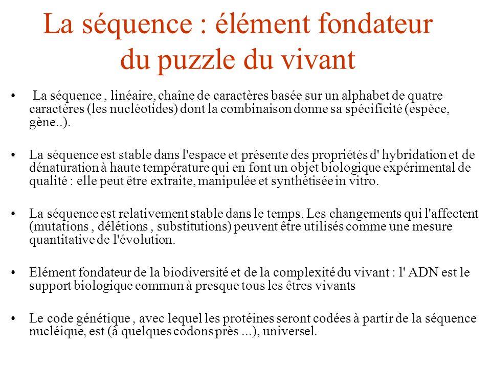 La séquence : élément fondateur du puzzle du vivant La séquence, linéaire, chaîne de caractères basée sur un alphabet de quatre caractères (les nucléo