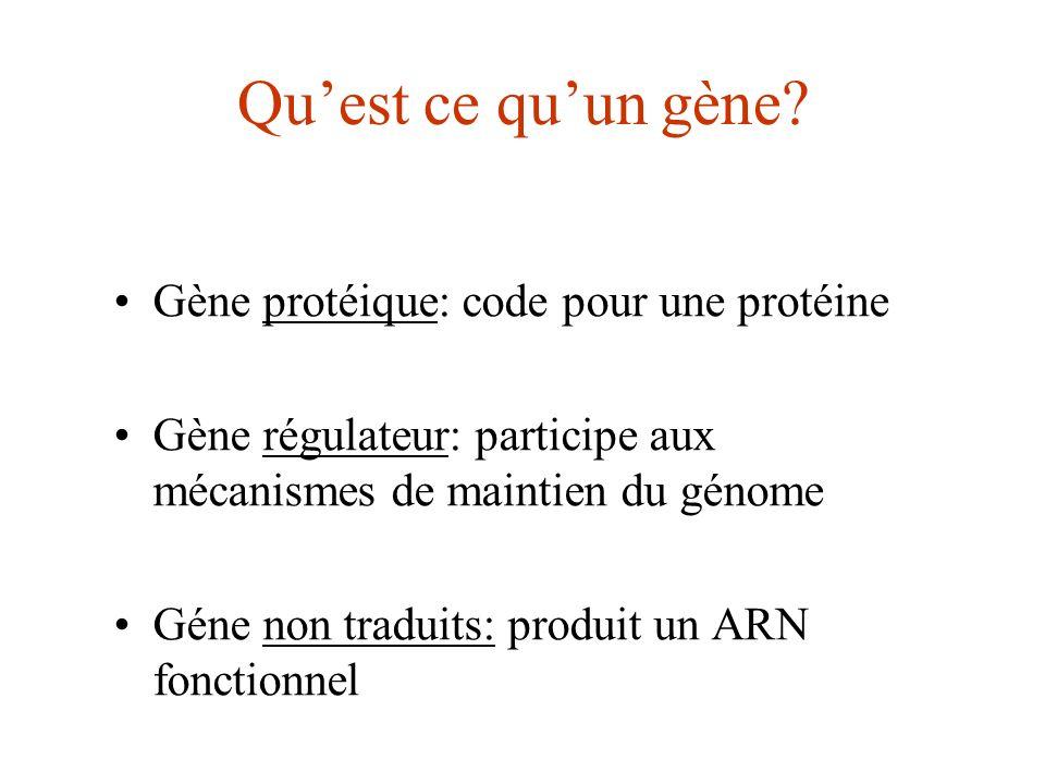 Quest ce quun gène? Gène protéique: code pour une protéine Gène régulateur: participe aux mécanismes de maintien du génome Géne non traduits: produit