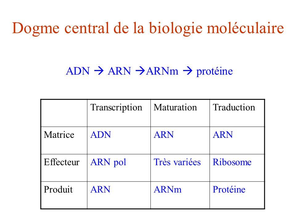 Dogme central de la biologie moléculaire ADN ARN ARNm protéine TranscriptionMaturationTraduction MatriceADNARN EffecteurARN polTrès variéesRibosome Pr