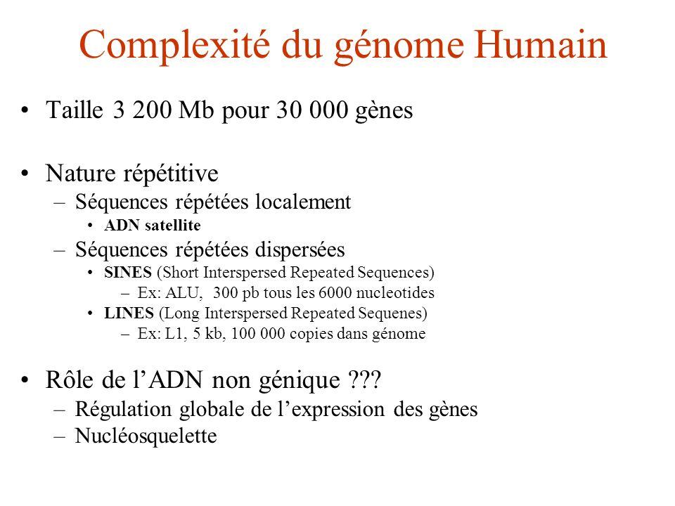 Complexité du génome Humain Taille 3 200 Mb pour 30 000 gènes Nature répétitive –Séquences répétées localement ADN satellite –Séquences répétées dispe