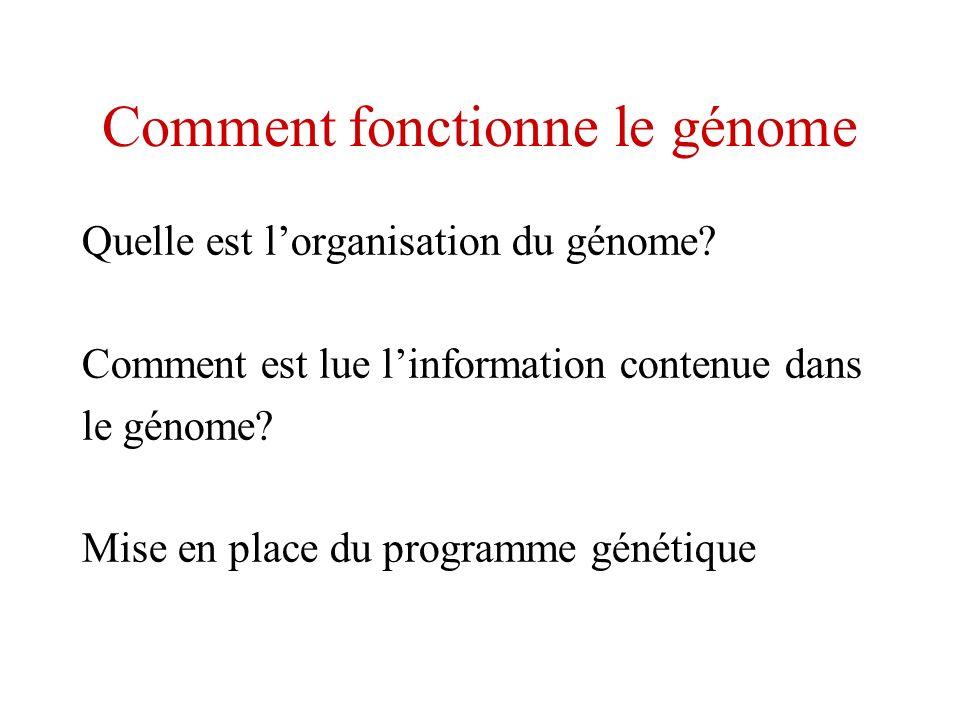 Comment fonctionne le génome Quelle est lorganisation du génome? Comment est lue linformation contenue dans le génome? Mise en place du programme géné