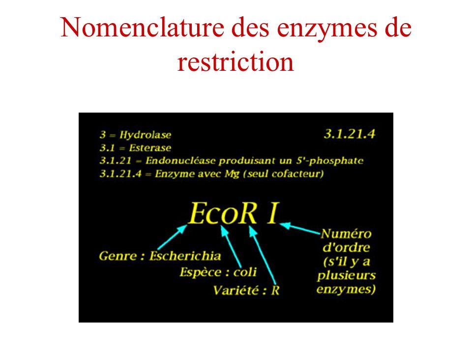 Nomenclature des enzymes de restriction