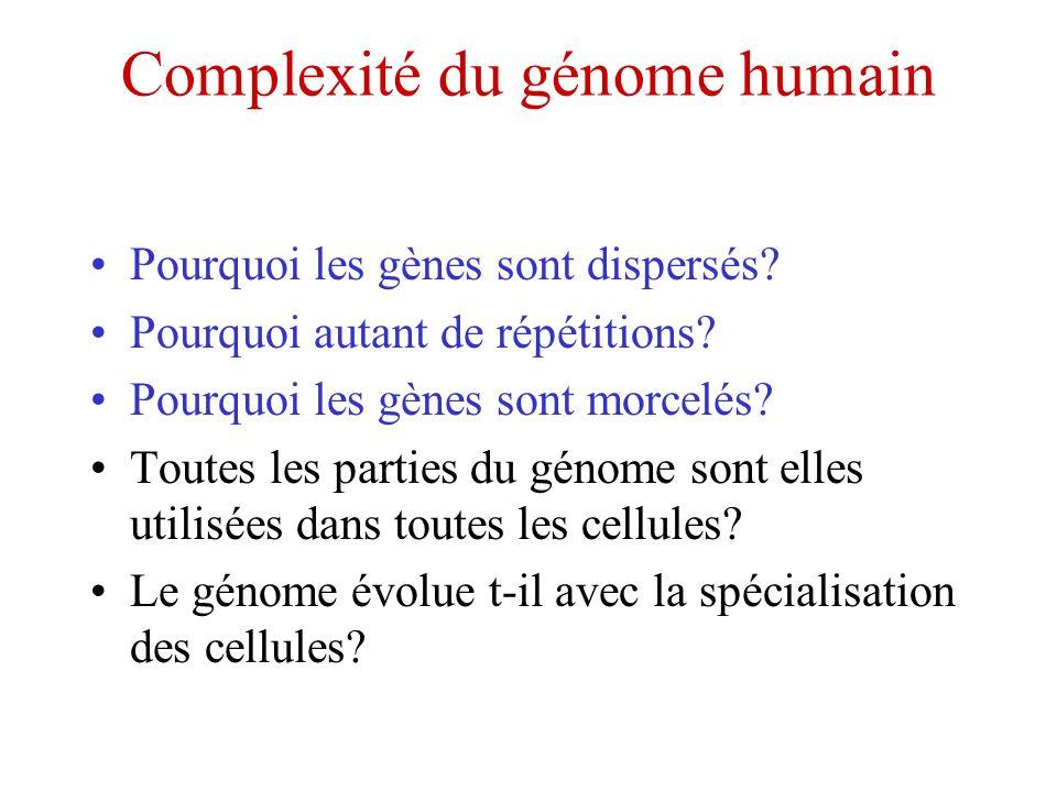 Complexité du génome humain Pourquoi les gènes sont dispersés? Pourquoi autant de répétitions? Pourquoi les gènes sont morcelés? Toutes les parties du