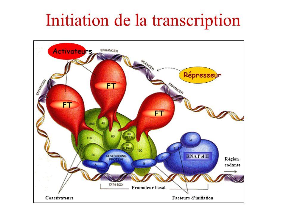 Initiation de la transcription Répresseur Activateurs FT Promoteur basal Facteurs dinitiation RNA Pol II Région codante Coactivateurs