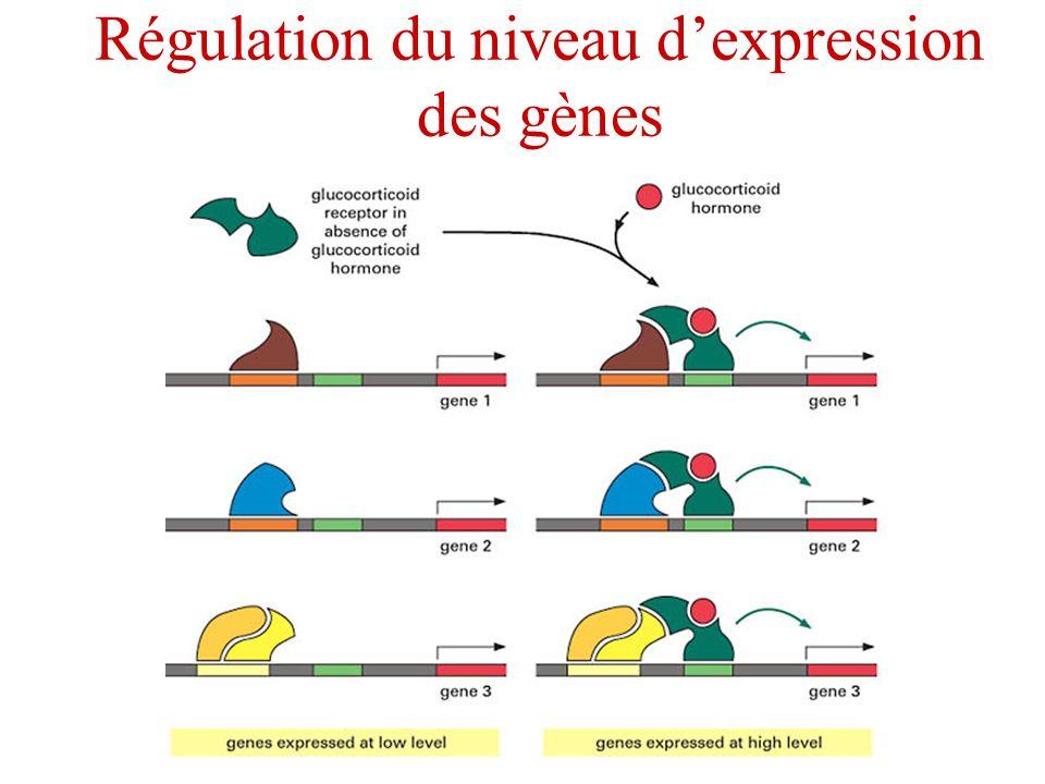 Régulation du niveau dexpression des gènes