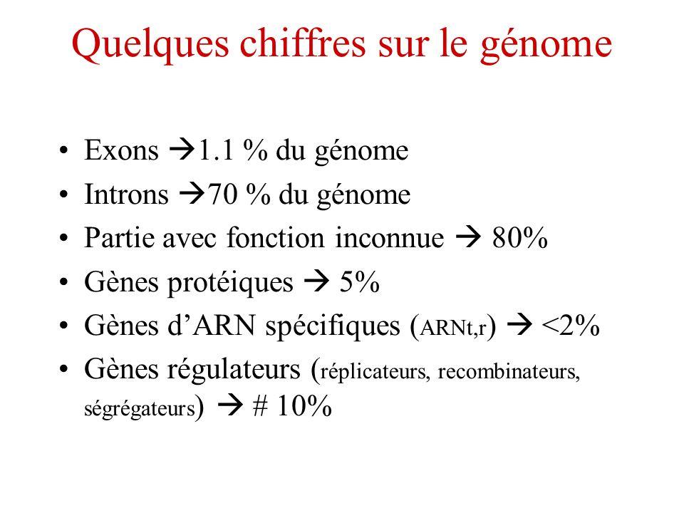 Quelques chiffres sur le génome Exons 1.1 % du génome Introns 70 % du génome Partie avec fonction inconnue 80% Gènes protéiques 5% Gènes dARN spécifiq
