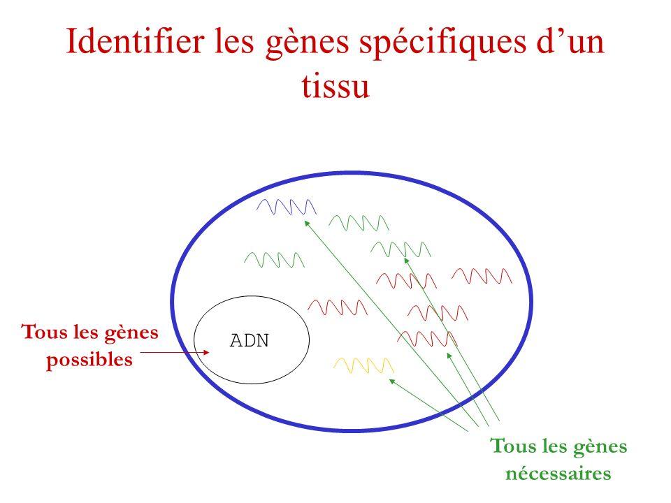 Identifier les gènes spécifiques dun tissu ADN Tous les gènes possibles Tous les gènes nécessaires