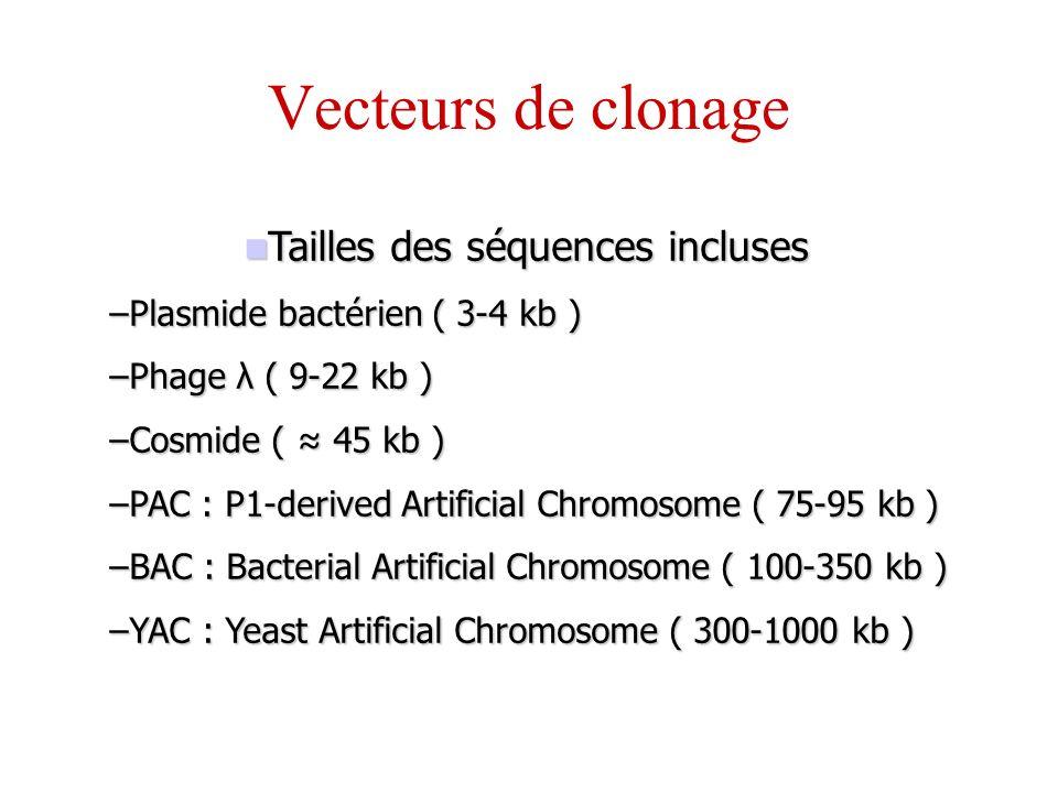 Tailles des séquences incluses Tailles des séquences incluses –Plasmide bactérien ( 3-4 kb ) –Phage λ ( 9-22 kb ) –Cosmide ( 45 kb ) –PAC : P1-derived