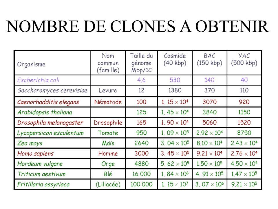 NOMBRE DE CLONES A OBTENIR