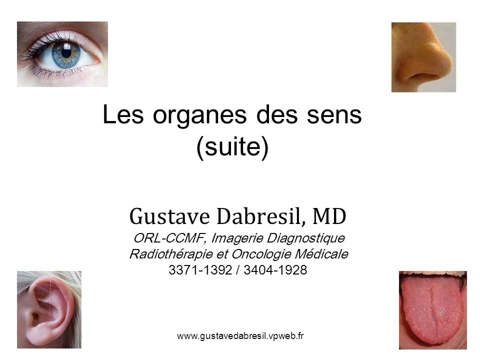 www.gustavedabresil.vpweb.fr Les organes des sens (suite) Gustave Dabresil, MD ORL-CCMF, Imagerie Diagnostique Radiothérapie et Oncologie Médicale 337