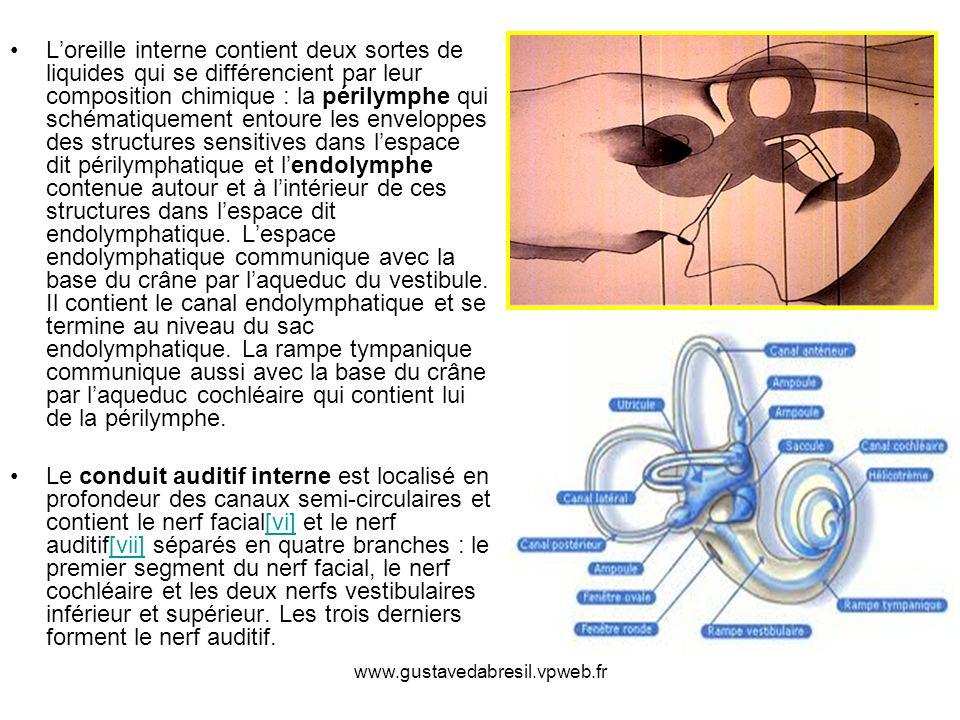 www.gustavedabresil.vpweb.fr Loreille interne contient deux sortes de liquides qui se différencient par leur composition chimique : la périlymphe qui
