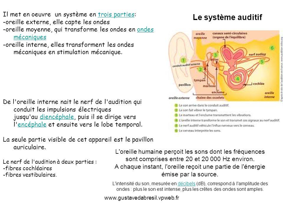 www.gustavedabresil.vpweb.fr Il met en oeuvre un système en trois parties:trois parties -oreille externe, elle capte les ondes -oreille moyenne, qui t
