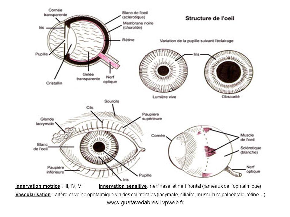 www.gustavedabresil.vpweb.fr Innervation motrice : III, IV, VI Innervation sensitive: nerf nasal et nerf frontal (rameaux de lophtalmique) Vascularisa