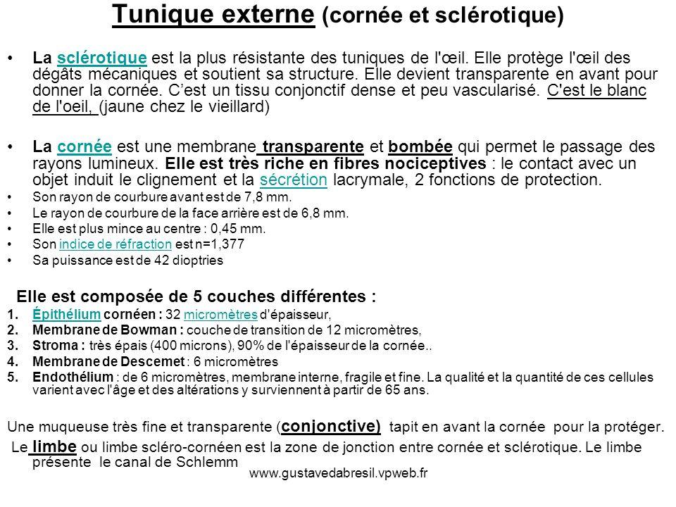 www.gustavedabresil.vpweb.fr Tunique externe (cornée et sclérotique) La sclérotique est la plus résistante des tuniques de l'œil. Elle protège l'œil d
