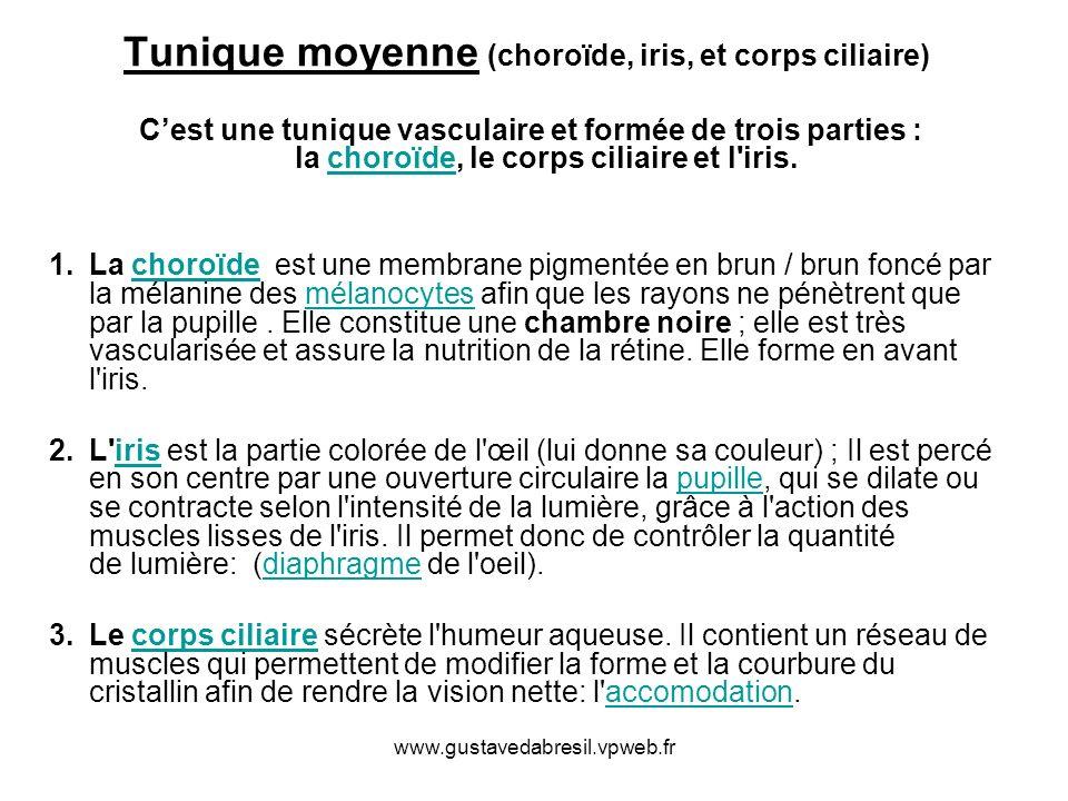Tunique moyenne (choroïde, iris, et corps ciliaire) Cest une tunique vasculaire et formée de trois parties : la choroïde, le corps ciliaire et l'iris.