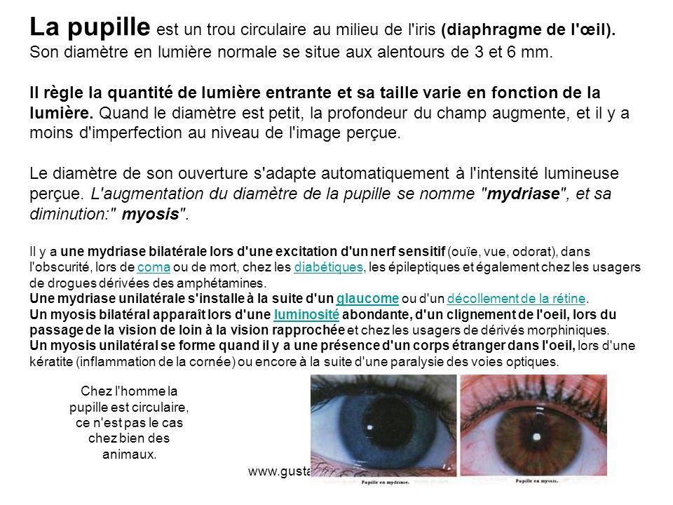 www.gustavedabresil.vpweb.fr La pupille est un trou circulaire au milieu de l'iris (diaphragme de l'œil). Son diamètre en lumière normale se situe aux