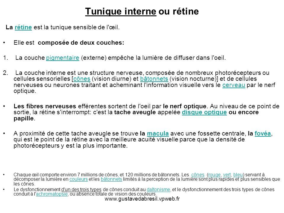 www.gustavedabresil.vpweb.fr Tunique interne ou rétine La rétine est la tunique sensible de l'œil.rétine Elle est composée de deux couches: 1. La couc