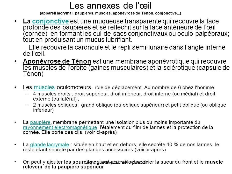 www.gustavedabresil.vpweb.fr Les annexes de lœil (appareil lacrymal, paupières, muscles, aponévrose de Ténon, conjonctive...) La conjonctive est une m