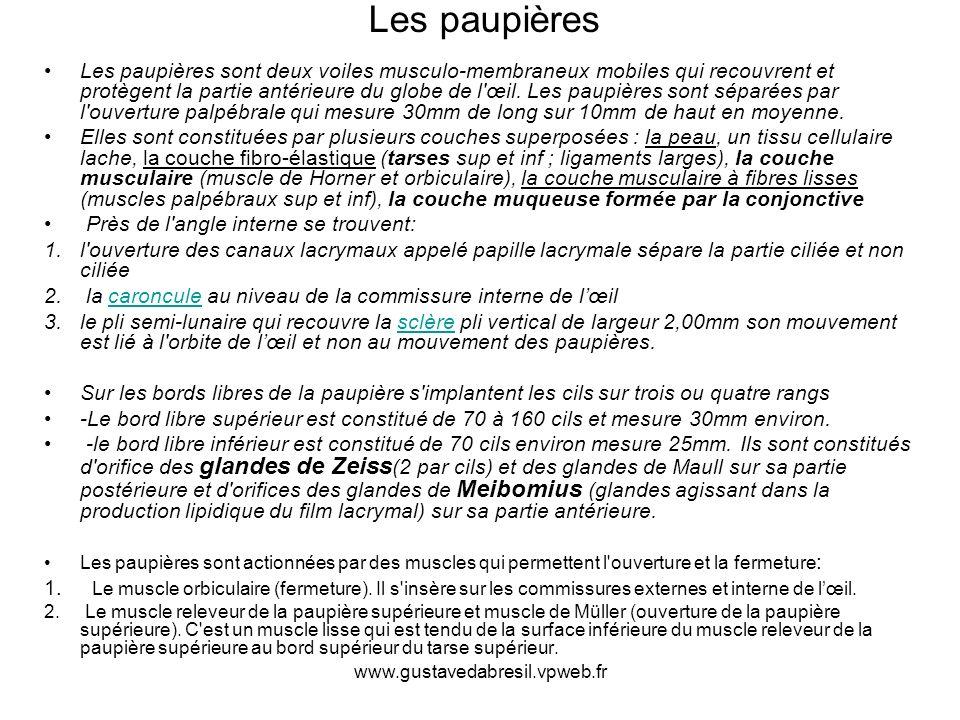 www.gustavedabresil.vpweb.fr Les paupières sont deux voiles musculo-membraneux mobiles qui recouvrent et protègent la partie antérieure du globe de l'