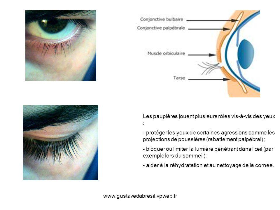 www.gustavedabresil.vpweb.fr Les paupières jouent plusieurs rôles vis-à-vis des yeux : - protéger les yeux de certaines agressions comme les projectio