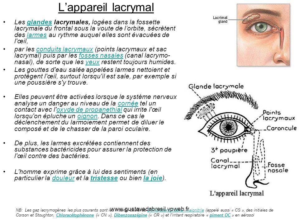 www.gustavedabresil.vpweb.fr Lappareil lacrymal Les glandes lacrymales, logées dans la fossette lacrymale du frontal sous la voute de lorbite, sécrète