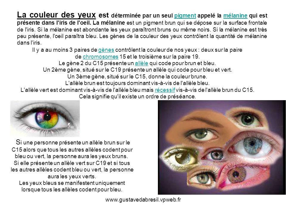 www.gustavedabresil.vpweb.fr La couleur des yeux est déterminée par un seul pigment appelé la mélanine qui est présente dans l'iris de l'oeil. La méla