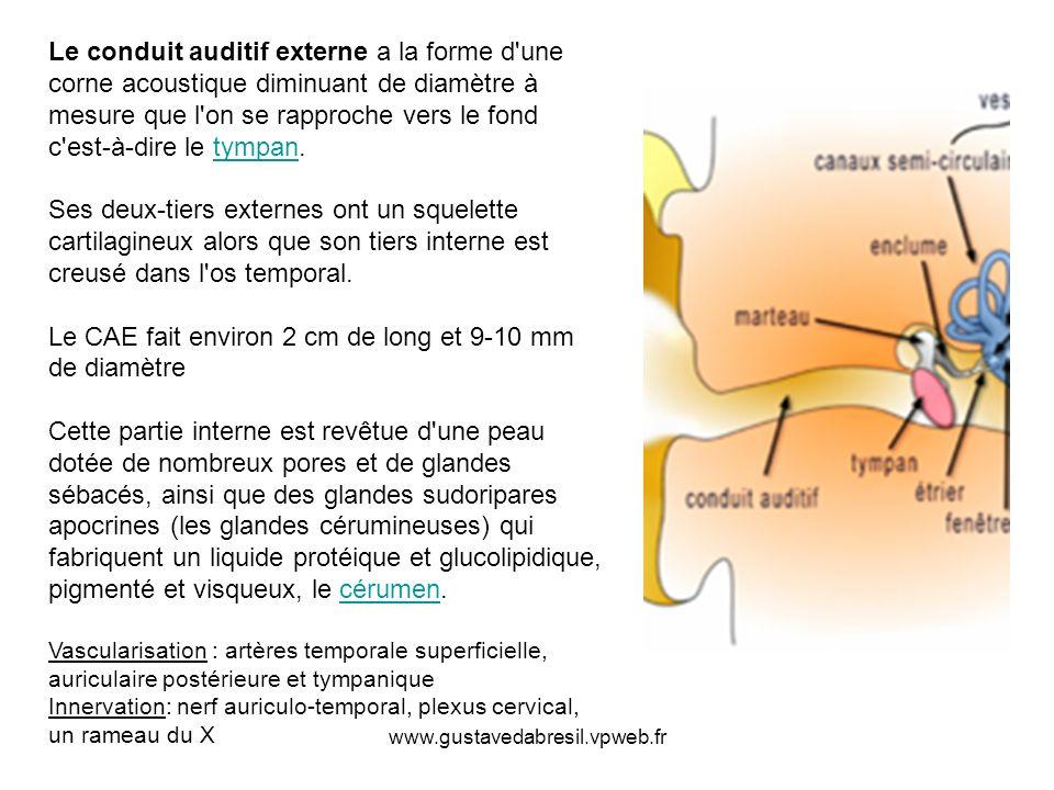 www.gustavedabresil.vpweb.fr Le conduit auditif externe a la forme d'une corne acoustique diminuant de diamètre à mesure que l'on se rapproche vers le