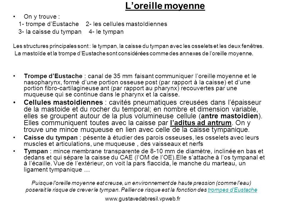www.gustavedabresil.vpweb.fr Loreille moyenne On y trouve : 1- trompe dEustache 2- les cellules mastoïdiennes 3- la caisse du tympan 4- le tympan Les